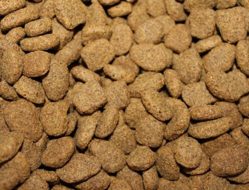 Why Feed Your Pet Raw Food?