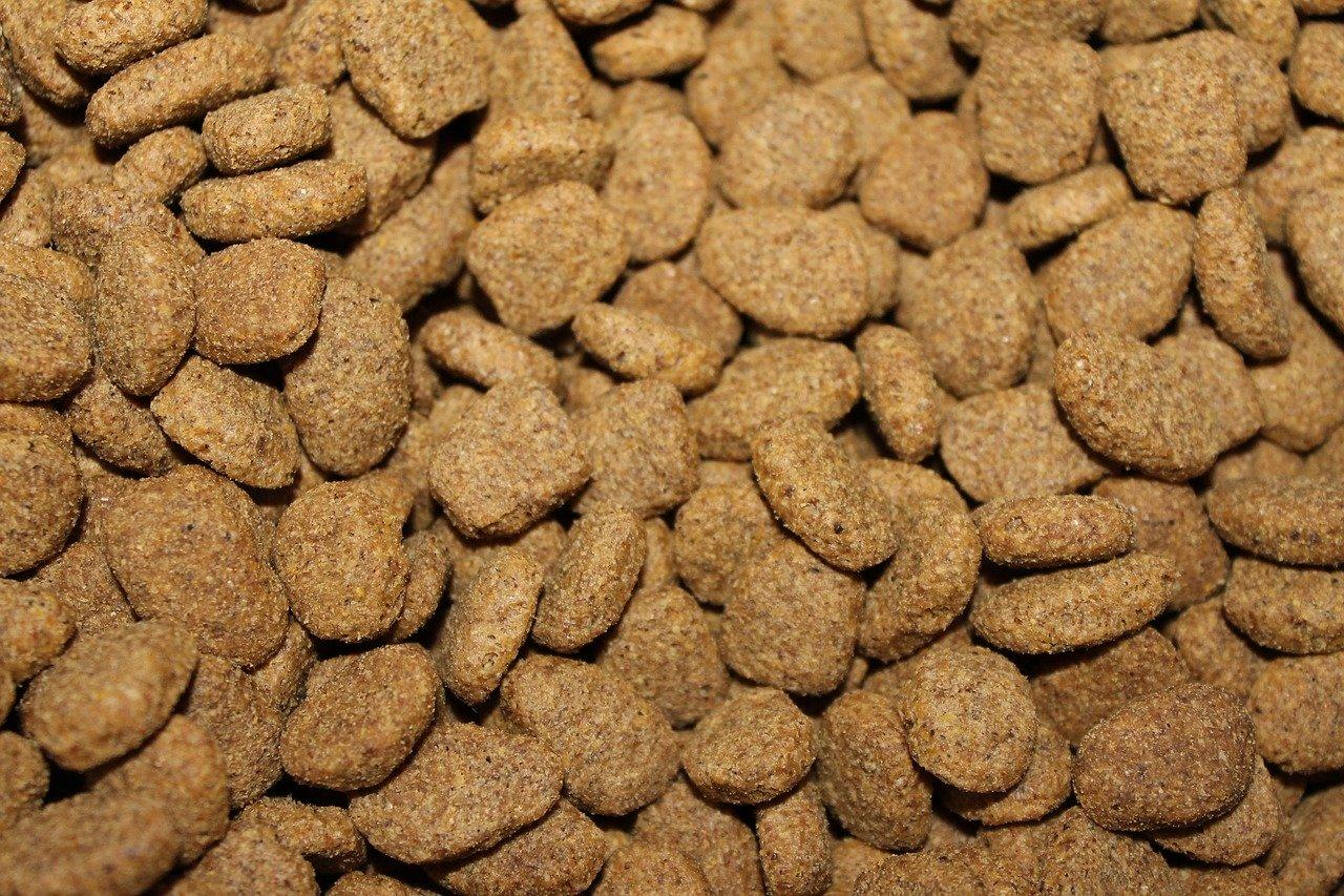 dog kibble food