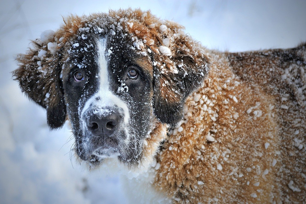 dog in snow looking unhappy