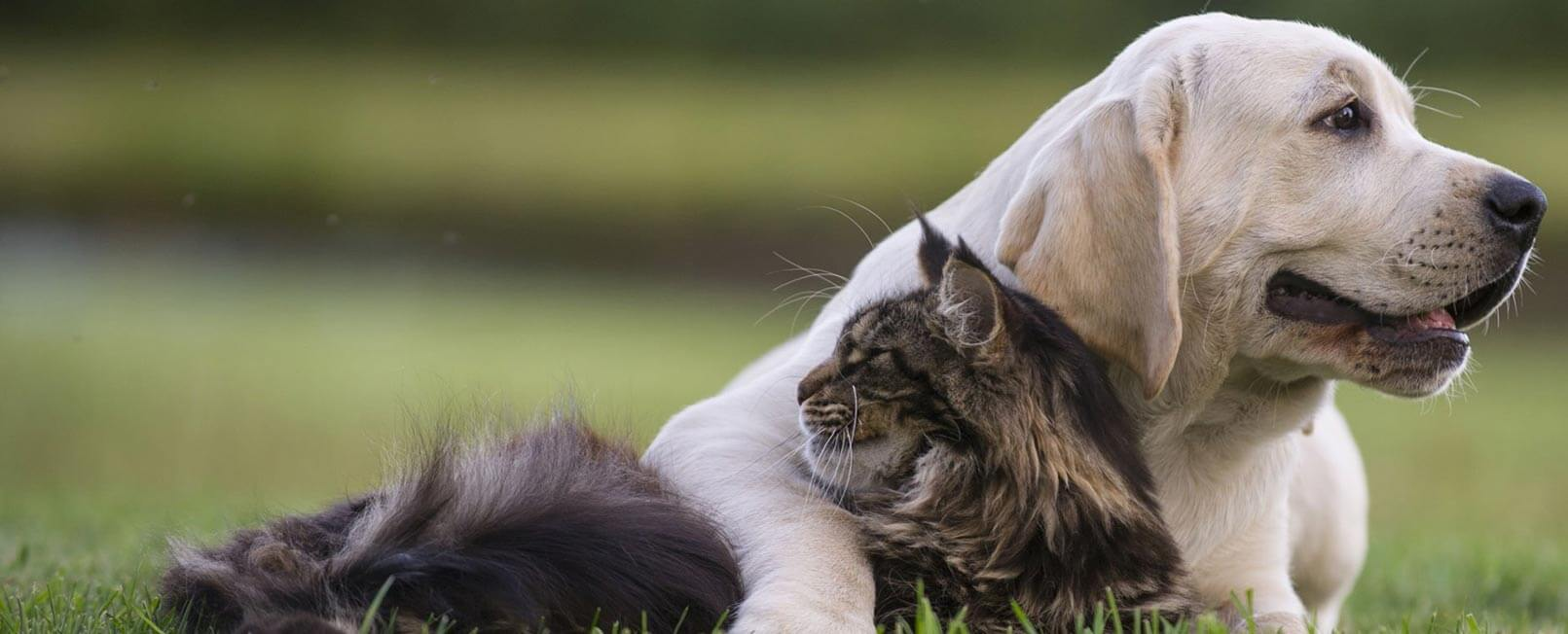 Dog and Cat snuggling in field